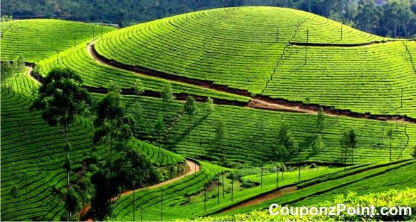 Munnar Tourist Places in Kerala