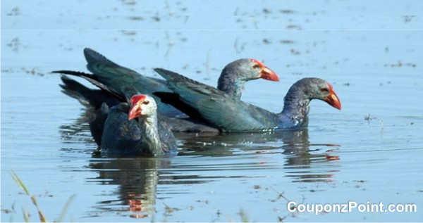 kumarakam birds tourist places in alleppey