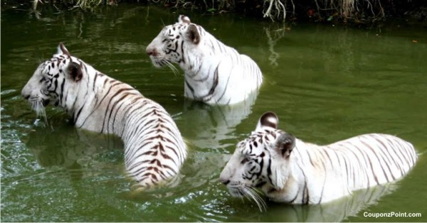 Nehru Zoological Park Tourist Places to Visit in Hyderabad